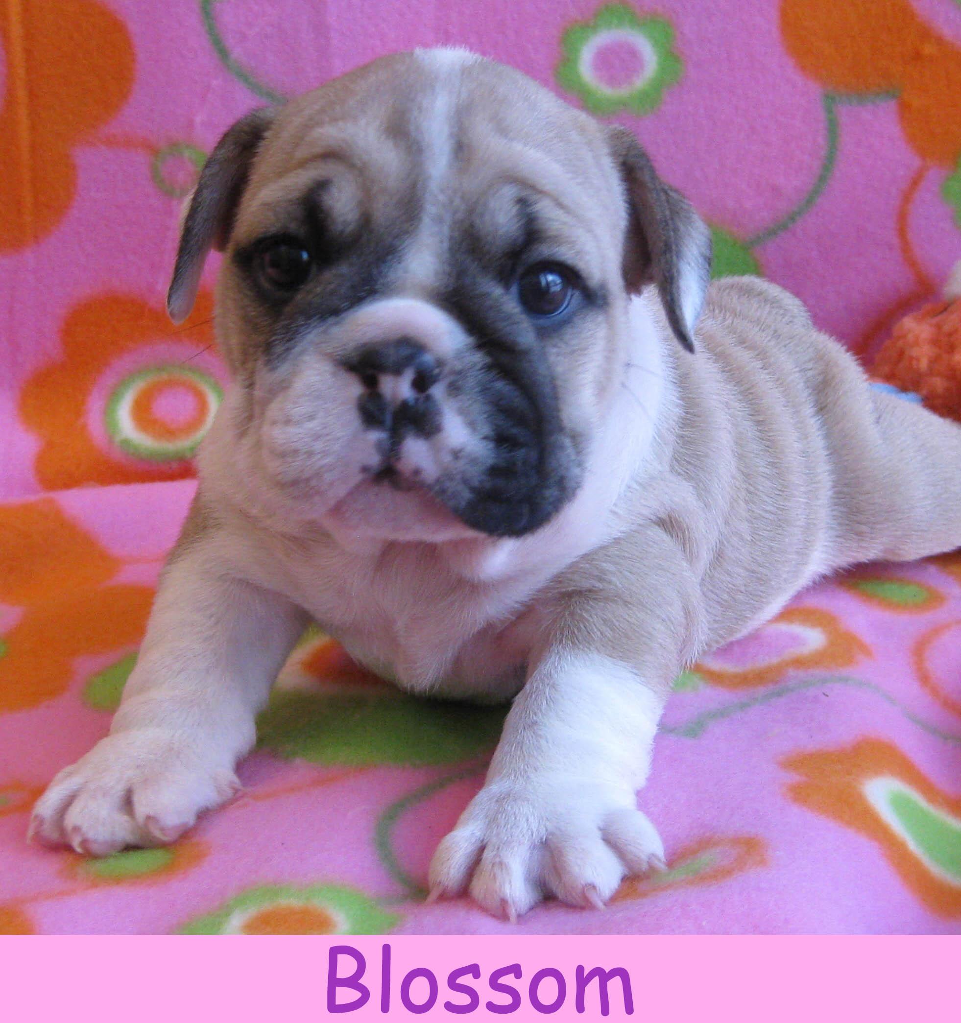 f-blossom1213.jpg