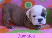 f-jamaica1213.jpg