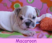 f-macaroon1213.jpg