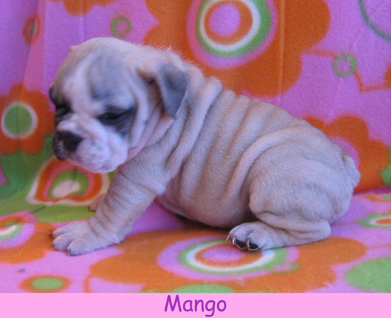 f-mango1213.jpg