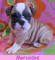 f-mercedes1213.jpg