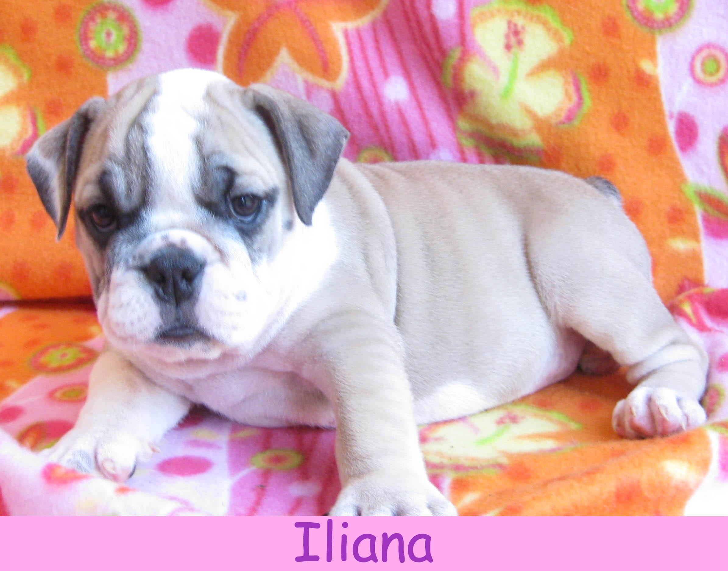 filiana14.jpg