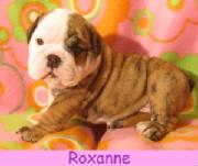 froxanne14.jpg