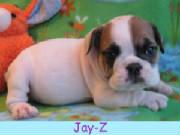 m-Jay-Z1213.jpg