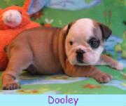 m-dooley1213.jpg