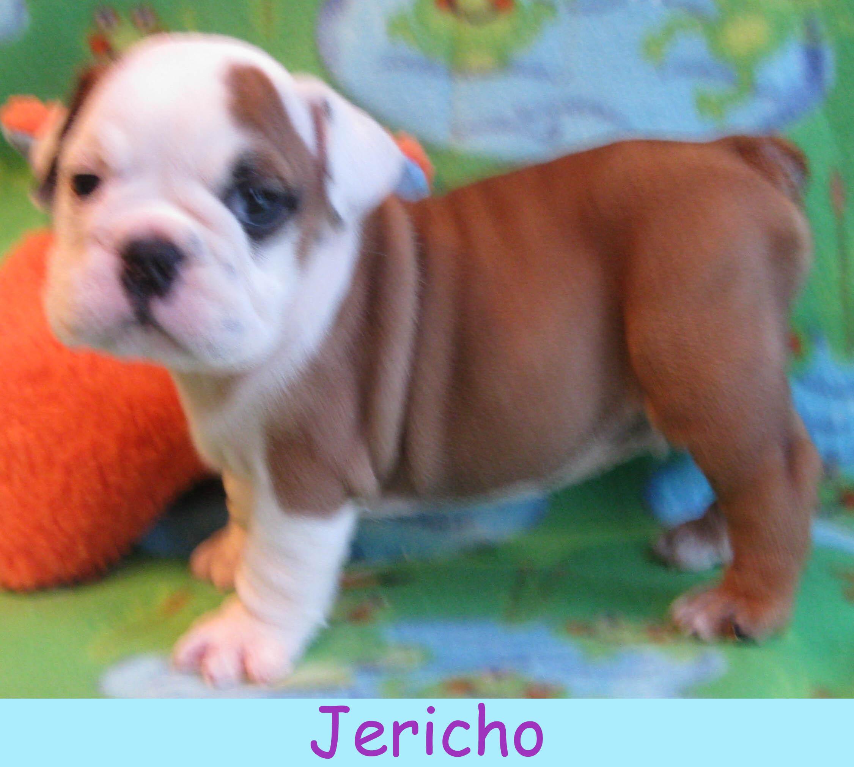 m-jericho213.jpg