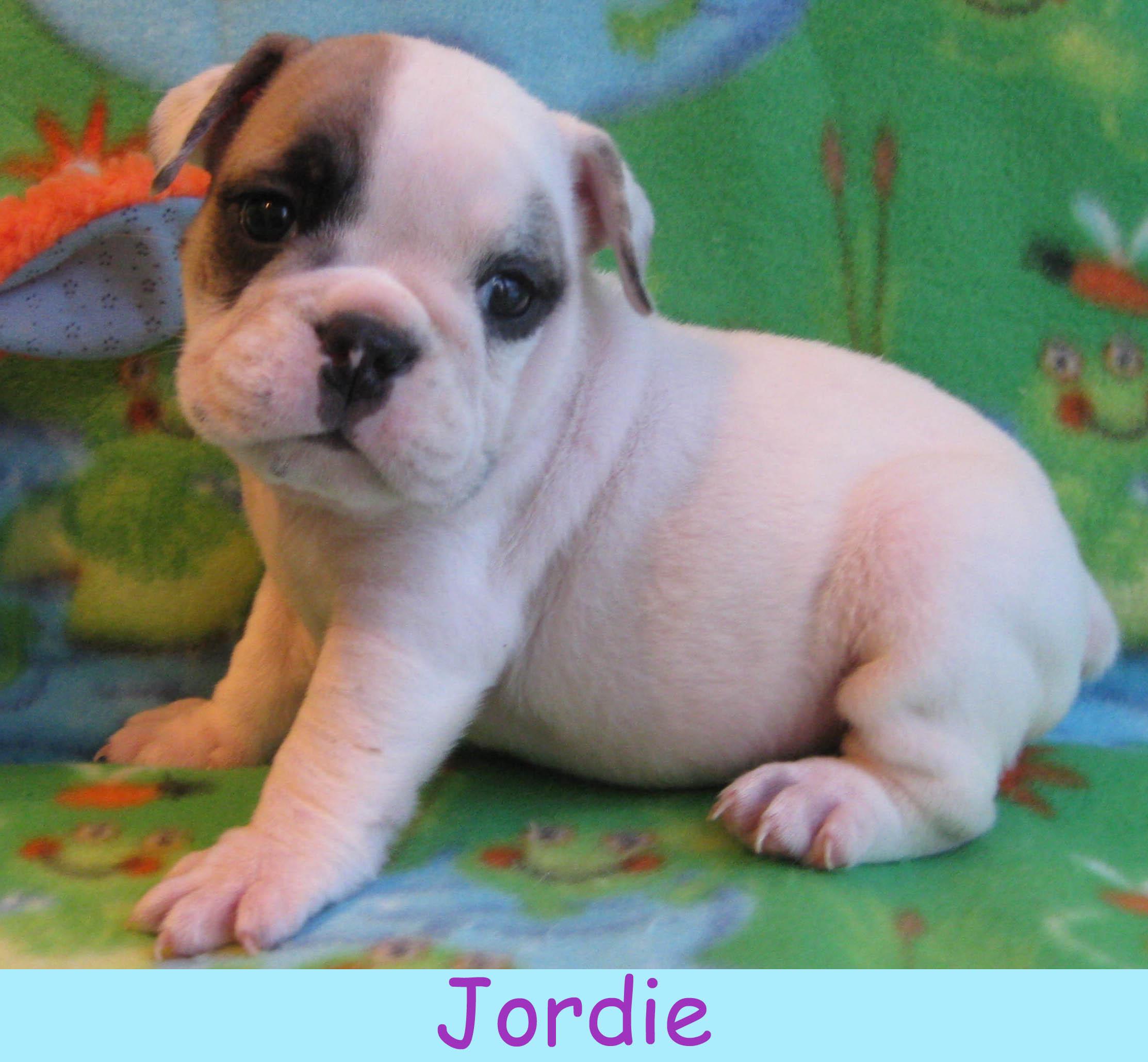 m-jordie1213.jpg
