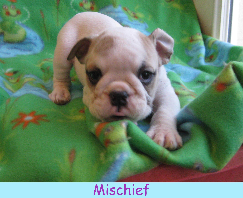 m-mischief1213.jpg
