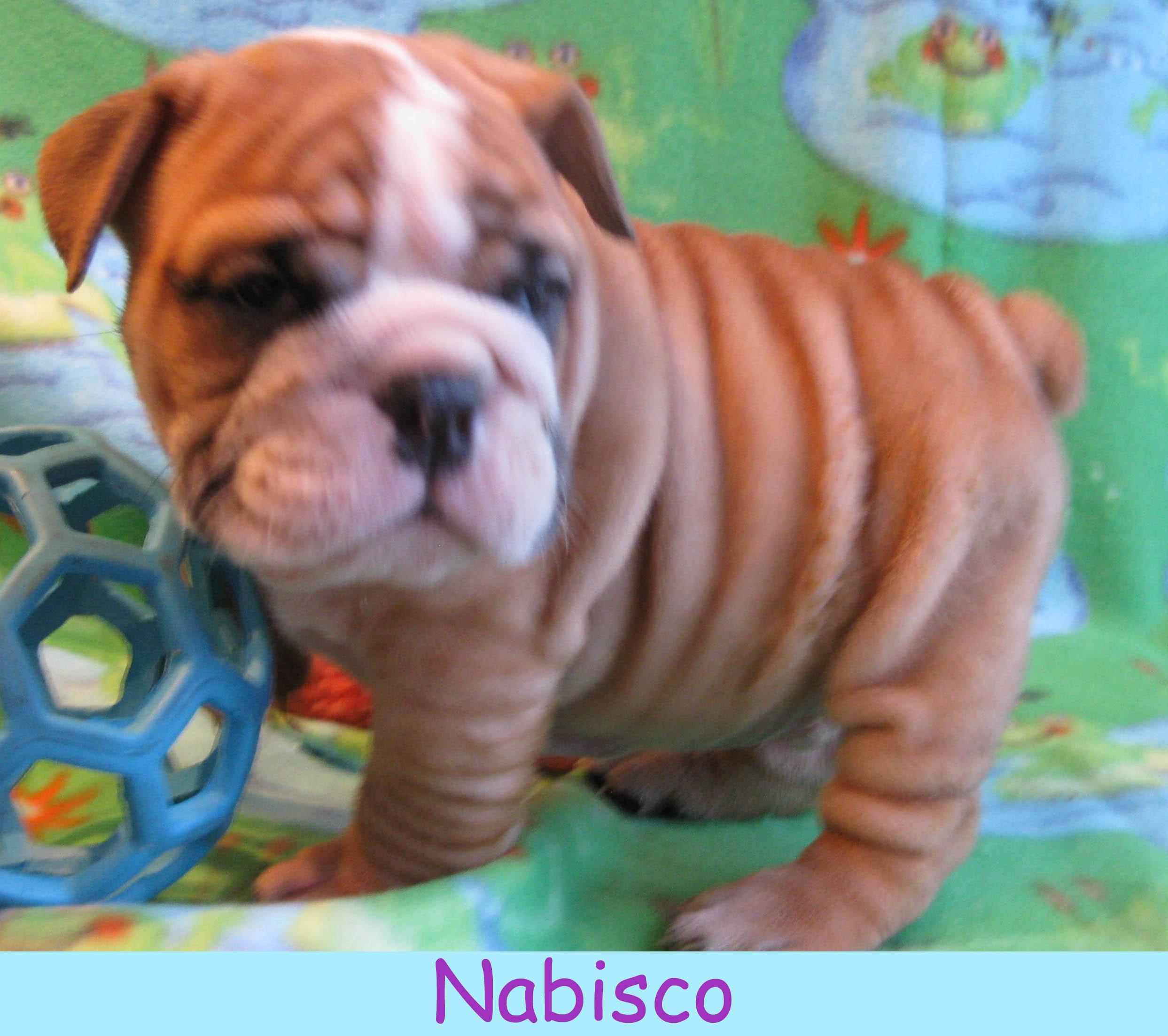 m-nabisco1213.jpg