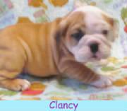 mClancy314a.jpg