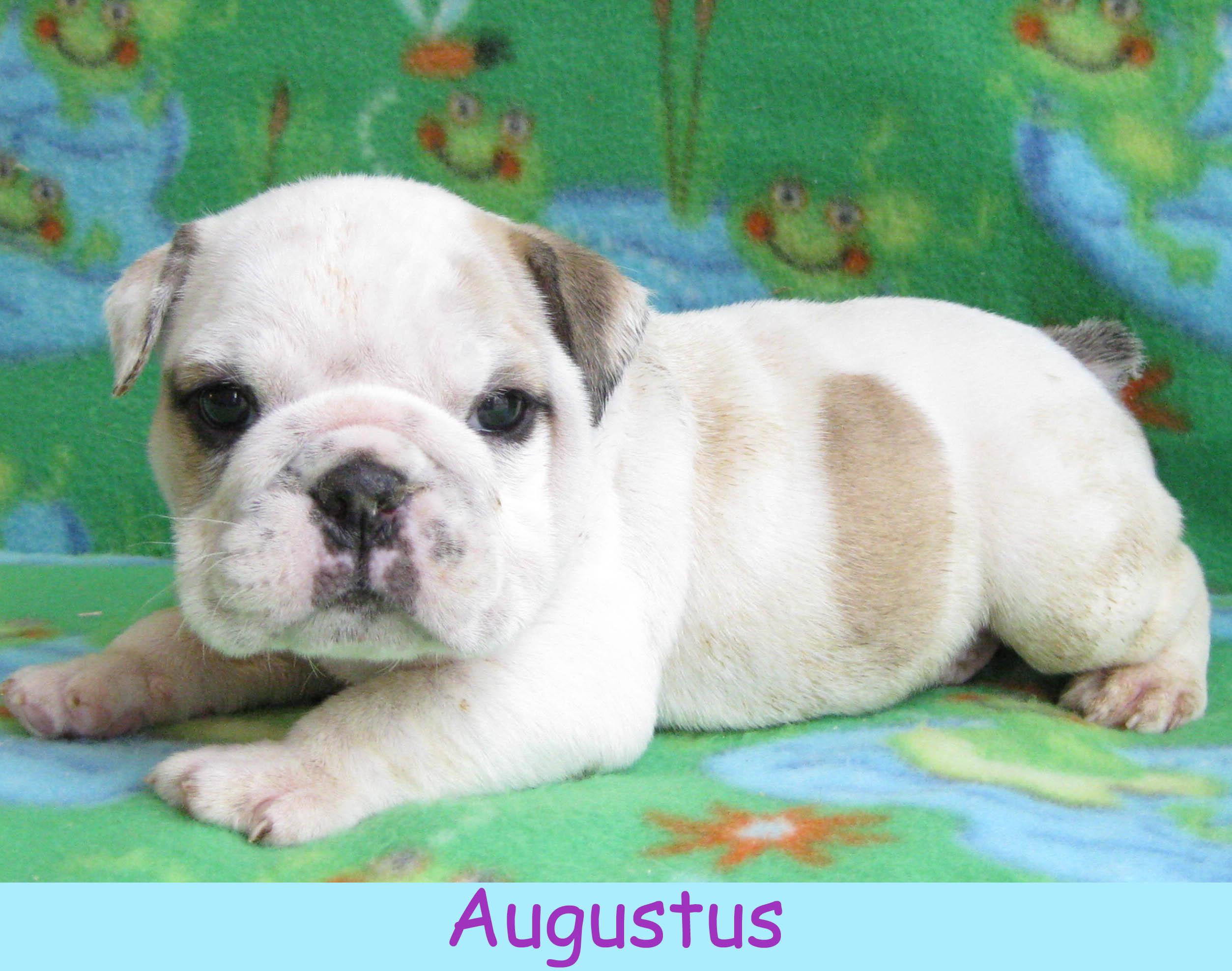 maugustus1214.jpg
