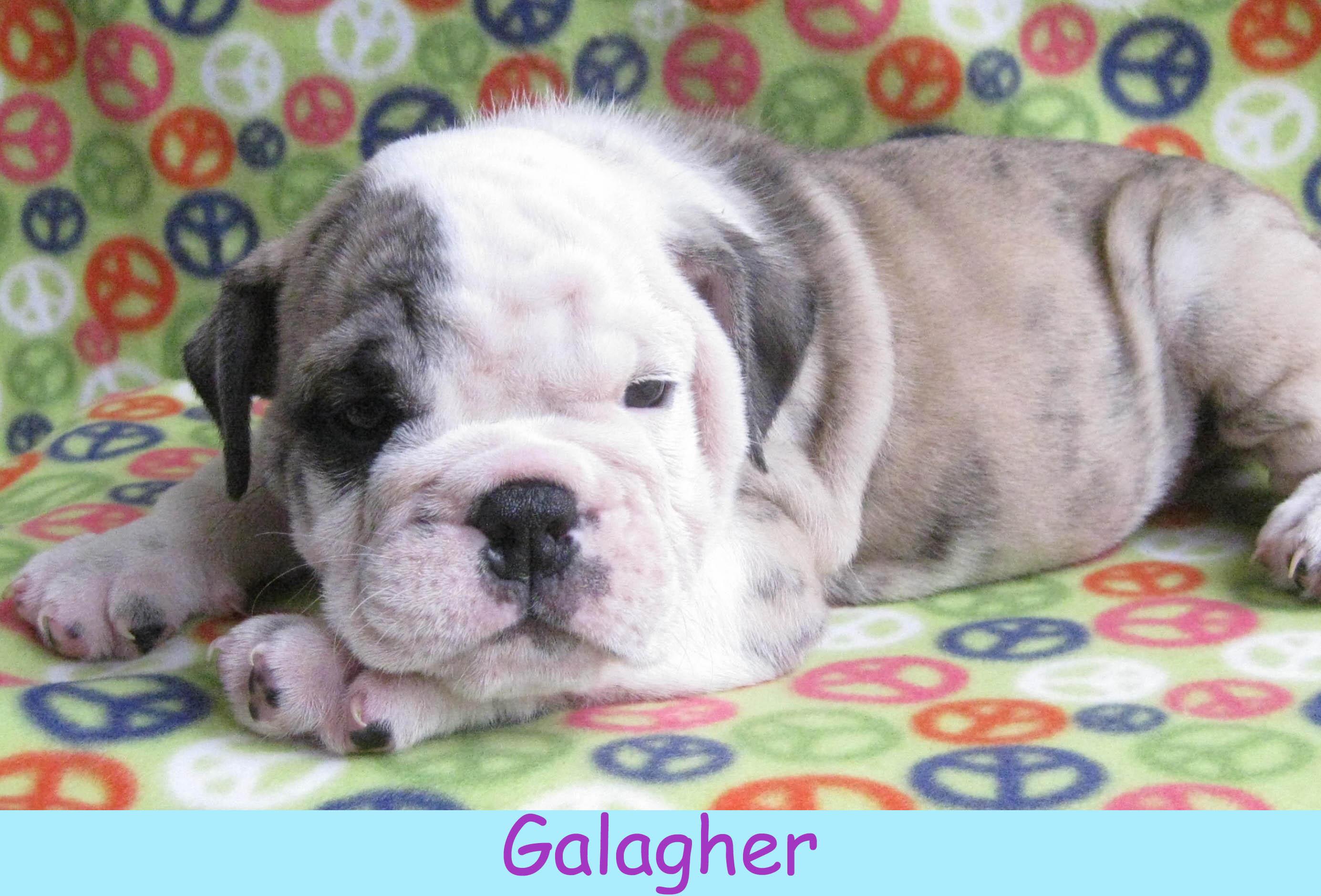 mgalagher141.jpg