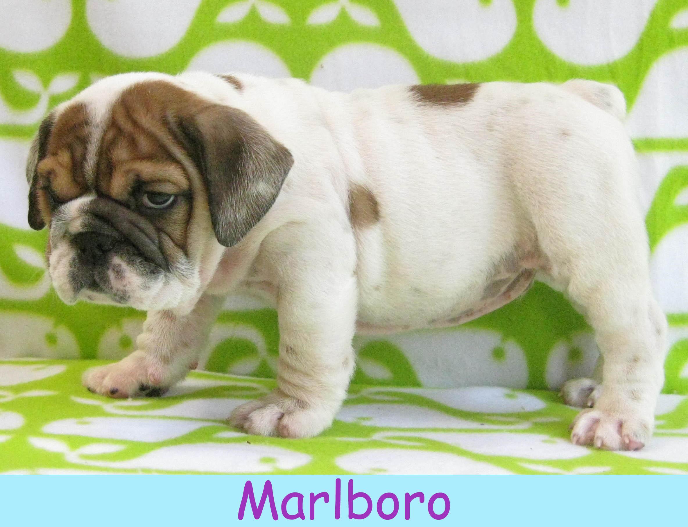 mmarlboro14.jpg